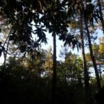 Séjour à Center Parcs les Hauts de Bruyères – Partie 2