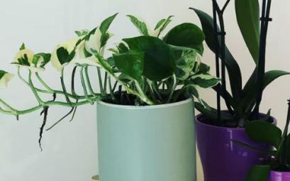 comment arreter de tuer ses plantes