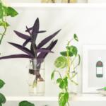 Plant tour : mes plantes en Avril 2020 !